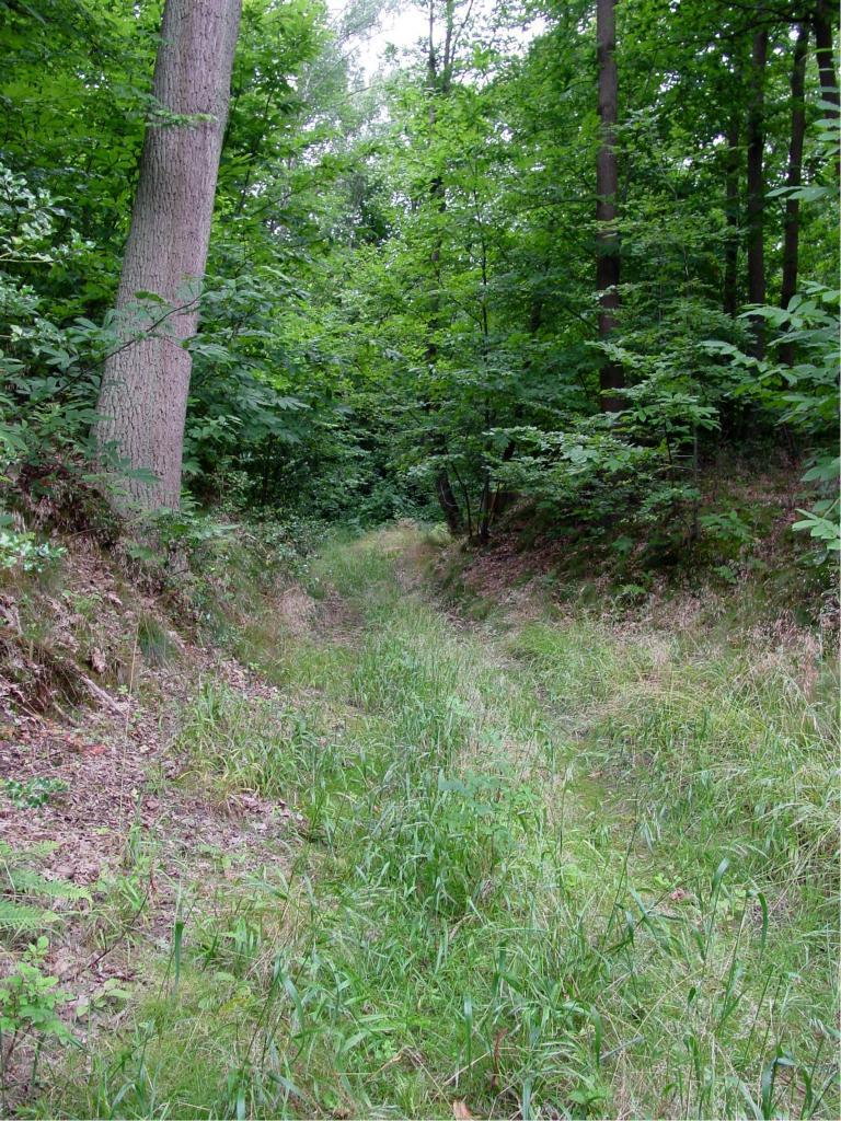 Haut Orgeval, ancien chemin médiéval  vers la ferme de Beauregard