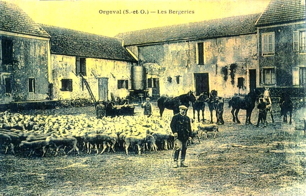 420 ferme des bergeries moutons
